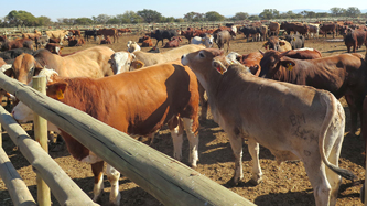 Kenya Aims To Boost Meat Exports - Africa Business Pages